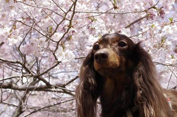 桜とくるみ