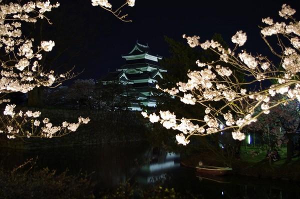 桜と松本城