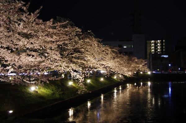 お掘りの桜