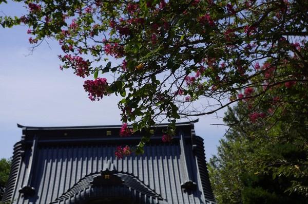 本殿から山門を見る