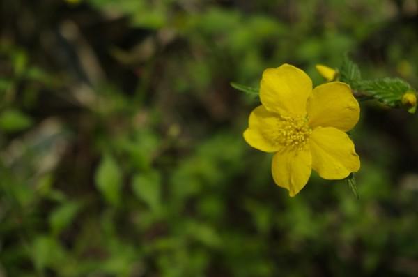 六義園の花