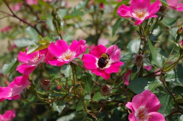 代々木公園の花