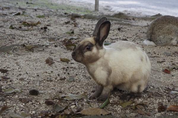 さっそくウサギさんがお出迎え