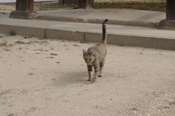 近づいてくる猫