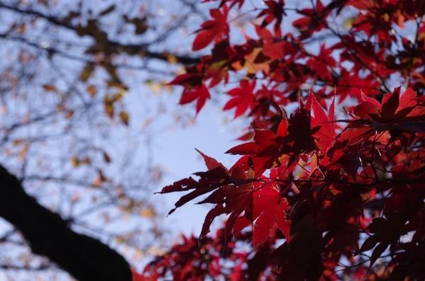2013-11-23-010.jpg