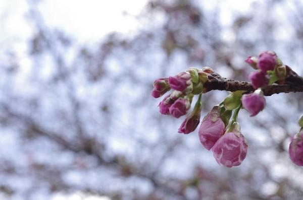 2014-03-23-004.jpg