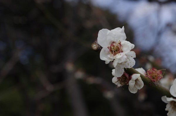 2014-03-23-007.jpg
