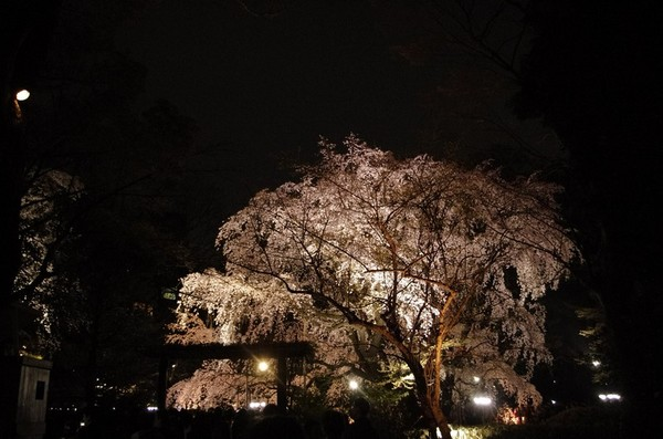 2014-03-29-001.jpg