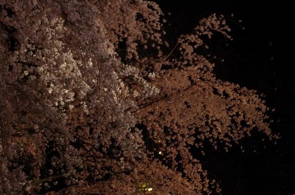 2014-03-29-006.jpg