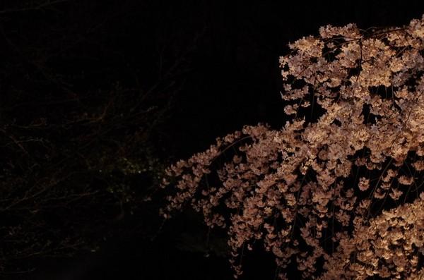 2014-03-29-007.jpg