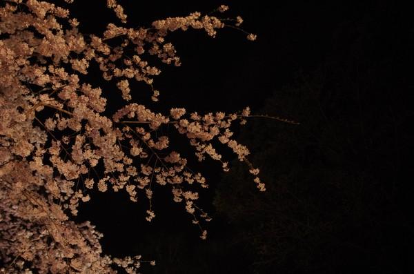 2014-03-29-008.jpg