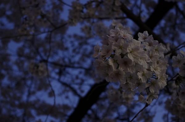 2014-03-30-102.jpg