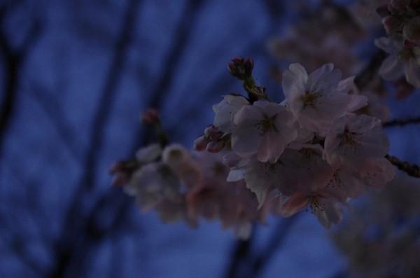 2014-03-30-105.jpg