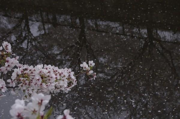 2014-04-07-006.jpg