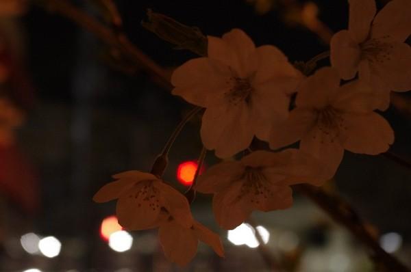 2015-03-31-003.jpg