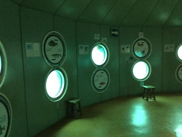 竜串海底館の内部。海底にやってまいりました。