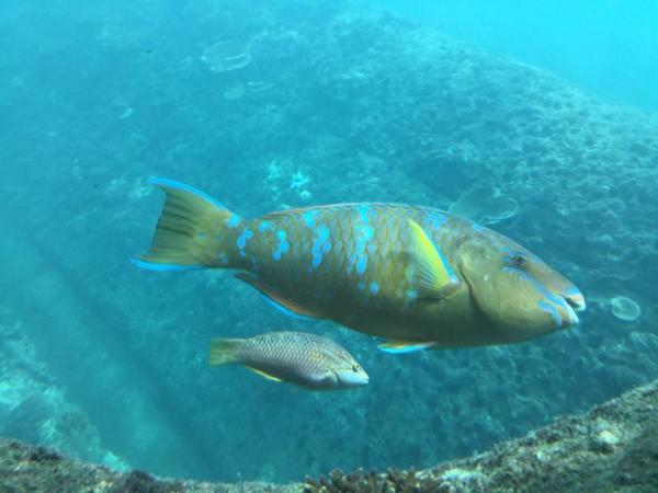 竜串海底館の内部よりお魚を見る