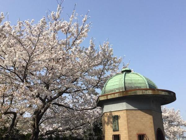 逸見波止場衛門と桜