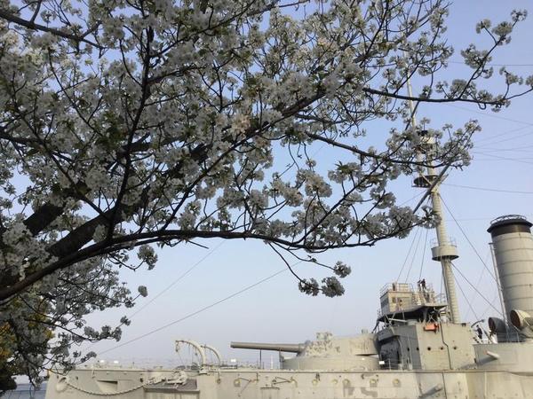記念艦三笠と桜