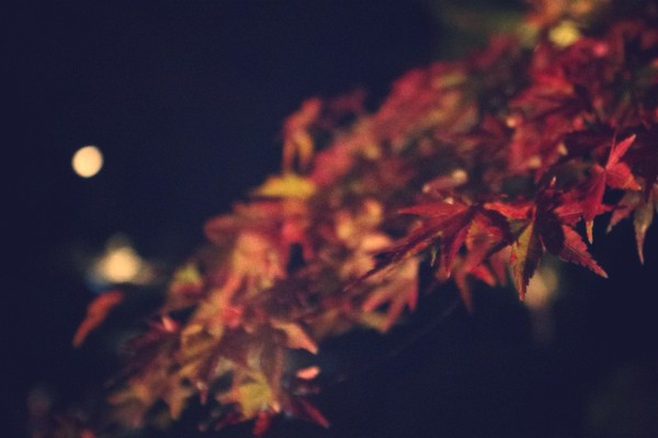 h2013-11-24-101.jpg